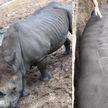 Бессердечные посетительницы зоопарка расписались на шкуре доверчивого носорога