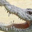 Подросток погиб в пасти крокодила на глазах у друзей