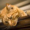 «Посмотрела 6 раз и не могу остановиться»: кот хотел напасть на хозяйку, но эпично «улетел» и рассмешил соцсети