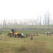 Жители Минска приступают к осенним посадкам деревьев и кустарников