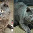 Кот с особенностями покорил своей внешностью соцсети и стал звездой TikTok