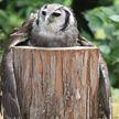 Видео с обнимающей бревно совой набирает популярность в Сети