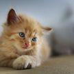 «Кто из них милее?» Реакция папы на котенка привела в восторг пользователей Сети! (ВИДЕО)