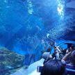 Первый в мире аквариум на высоте 2, 2 тыс. метров над уровнем моря появился в Китае