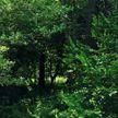 Пенсионерка провела шесть дней в лесу