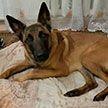 Собака спасла свою пожилую хозяйку, упавшую в погреб