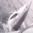 Британец поймал «рекордную» акулу, но зарегистрировать свой улов как рекорд не сможет