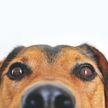 Собака смотрела фильм ужасов с хозяином и сильно впечатлилась! Только посмотрите – она все понимает! (ВИДЕО)