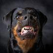 Собака загрызла трехмесячную дочь своих хозяев