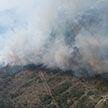 МЧС продолжает бороться с лесным пожаром на Ольманских болотах