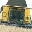 Уборочная-2020: в Витебской области только приступили к массовому сбору зерна – об особенностях работы в полях на севере Беларуси