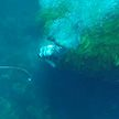 Акула напала на дайвера и съела серфера возле берегов Австралии