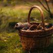 Трое человек умерли в Брестской области, отравившись грибами