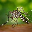 Случай заражения лихорадкой денге зафиксирован в Китае