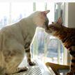 Кошка просила кота обратить на нее внимание, и вот что он делал в ответ. Посмотрите, у людей тоже так бывает! (ВИДЕО)