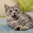Взгляд кошки на хозяйку, которая выплюнула воду, рассмешил всех до слез! (ВИДЕО)