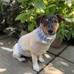 Олимпийский чемпион Том Дейли вязал свитер для собачки друзей, наблюдая за женскими соревнованиями