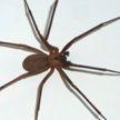 Британскому актеру грозит ампутация из-за укуса паука
