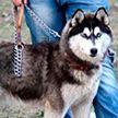 Двое жителей Столбцовского района повесили соседскую собаку