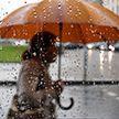 Шквалистый ветер, град, дожди: синоптики предупреждают об оранжевом уровне опасности в Минске