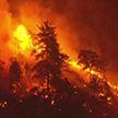 Лесные пожары в Калифорнии: за сутки выжжено около 4 тысяч гектаров