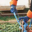 Удар по экономике: Брюссель запретил Риге ловлю трески