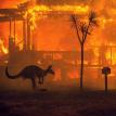 Полмиллиарда животных погибли из-за лесных пожаров в Австралии