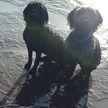 Британец выгуливал собак и нашел скелет динозавра