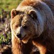 Мужчина месяц жил в берлоге медведя со сломанным позвоночником