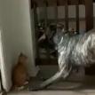 «Смекалка на уровне»: превосходство кошек над собаками засняли на видео