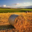 «Год был хороший. Не идеальный, а хороший»: Лукашенко о сельском хозяйстве