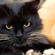 Кошка не разрешила мужу своей хозяйки взять ее телефон и вызвала восхищение пользователей Сети
