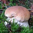 Правила сбора грибов и ягод в Беларуси напомнил Минлесхоз