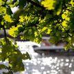 Оранжевый уровень опасности из-за гроз объявлен 9 июня в Беларуси