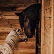 Лошадь отказалась от жеребенка, потому что он родился слишком маленьким. Но малышу очень повезло! (ВИДЕО)