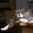Ученые: настроение кошки можно понять по её мимике