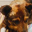 Собаке проломили череп и закопали заживо, но она выжила. История о спасении Малыша
