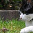 Мыши перегрызали электропроводку бронетехники, а кошки охраняли запасы: как животные выручали на войне Советскую армию и народ
