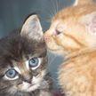 Наглая кошка отобрала у кота место отдыха. Посмотрите, может у нее стоит поучиться? (ВИДЕО)