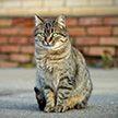 На Кипре бездомных котов будут кормить в специальных местах