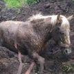 Лошадь, увязшую в болоте, спасли работники МЧС