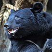 Как хорошо провести время? Мальчик из Китая решил поиграть с медведем (Видео)