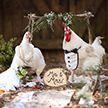 Фотограф организовала свадьбу для курицы и петуха (Фото)