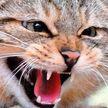 Коты устроили драку в прямом эфире во время интервью хозяйки