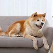 «Пес на энергетиках, а кот на валерьянке»: забавное видео с домашними животными рассмешило Сеть