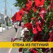 В Гомеле соорудили стену из семи тысяч цветов