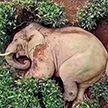 В Китае слоны пришли в деревню, выпили вина и уснули на чайной плантации. Отличная вечеринка, которой не было