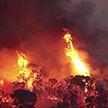 Пожар приближается к Афинам: жителей эвакуируют