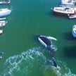 Огромный кит устроил переполох в яхт-клубе в Аргентине