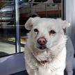 Без слез смотреть невозможно: пес неделю ждал хозяина возле больницы (ВИДЕО)